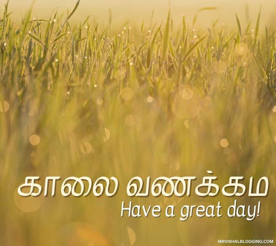 Good Morning Pictures In Tamil Free Download