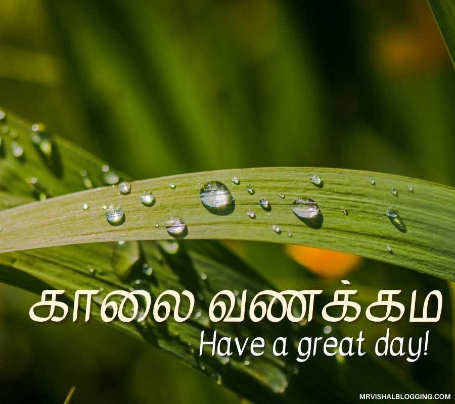 Good Morning In Tamil Photos