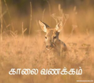 good morning images and messages in tamil